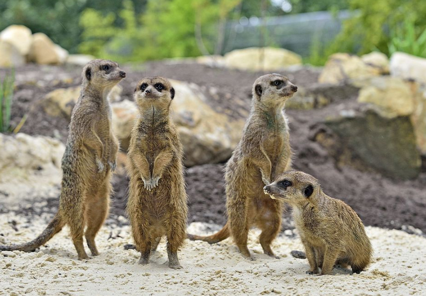 Feestweek bezoek dierentuin